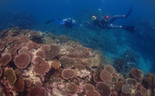 絶品サンゴ