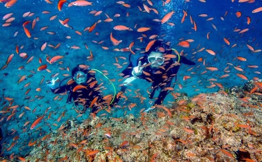 石垣島の魚群