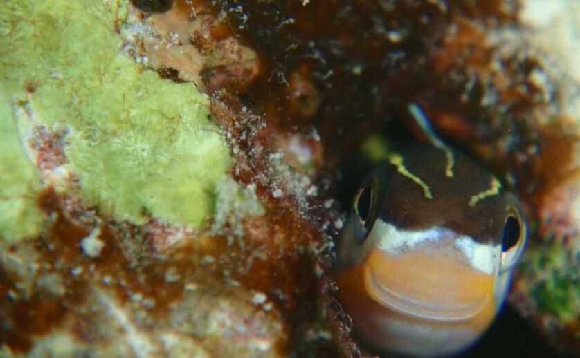 石垣島のウミウシ