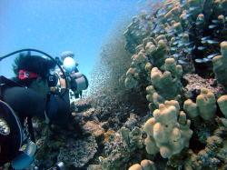 プロカメラマンが石垣島ダイビングで撮影するものは!?