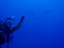 石垣島 ダイビング 大好きなマグロに囲まれて・・・・