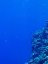 20100913a.jpg