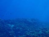 20111105f.jpg