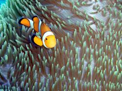珊瑚の下からこんにちは!